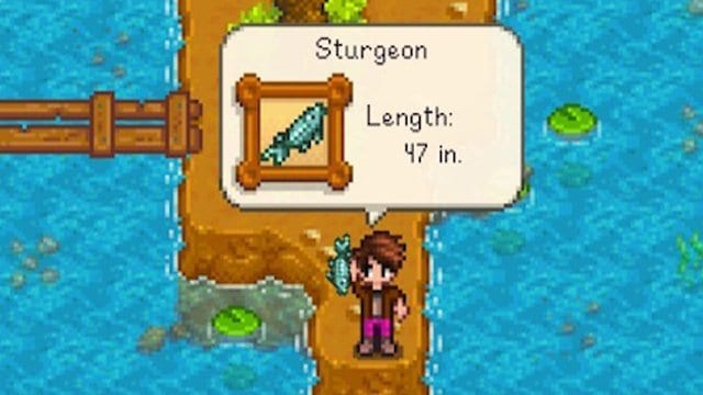 What are the uses of a sturgeon Stardew Valley?